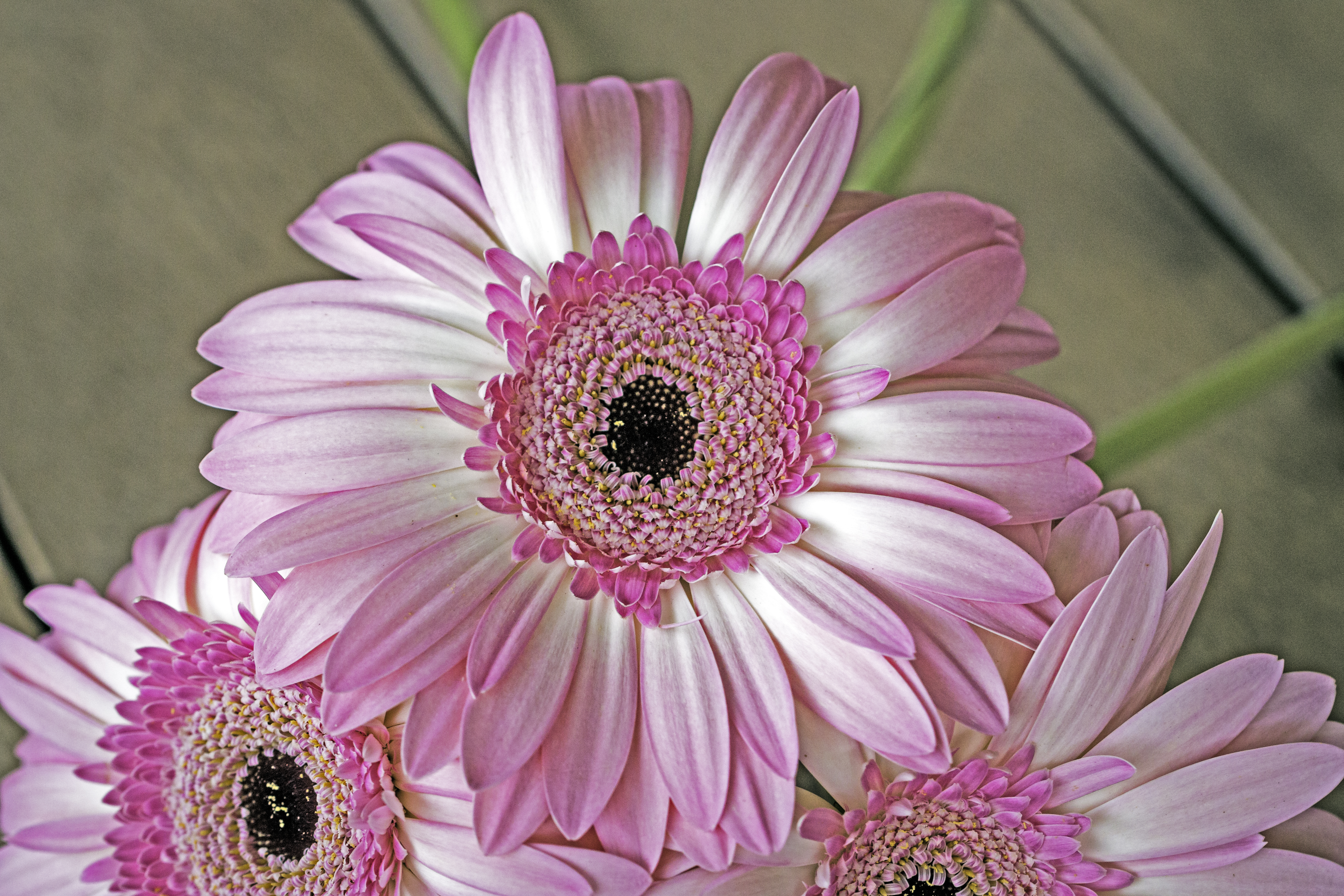 Gerbera: Balanced Friendships